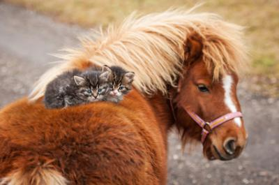Cheval aux chatons